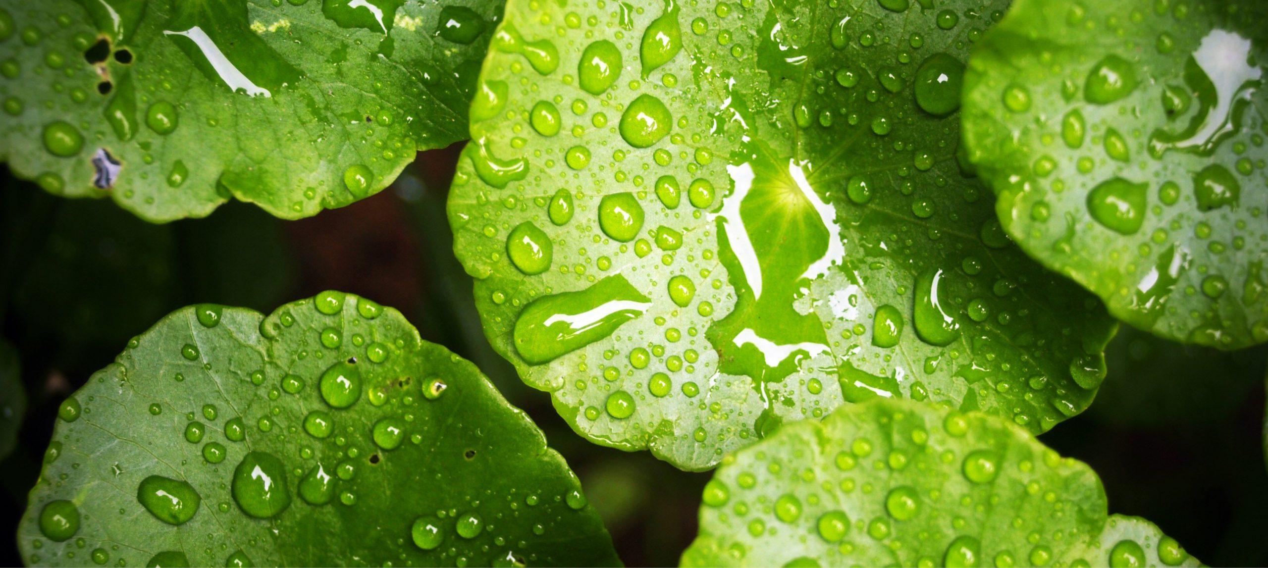 biowaterpool-Header
